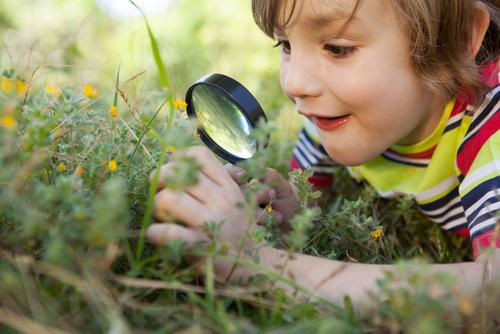 homeschooling curiosity